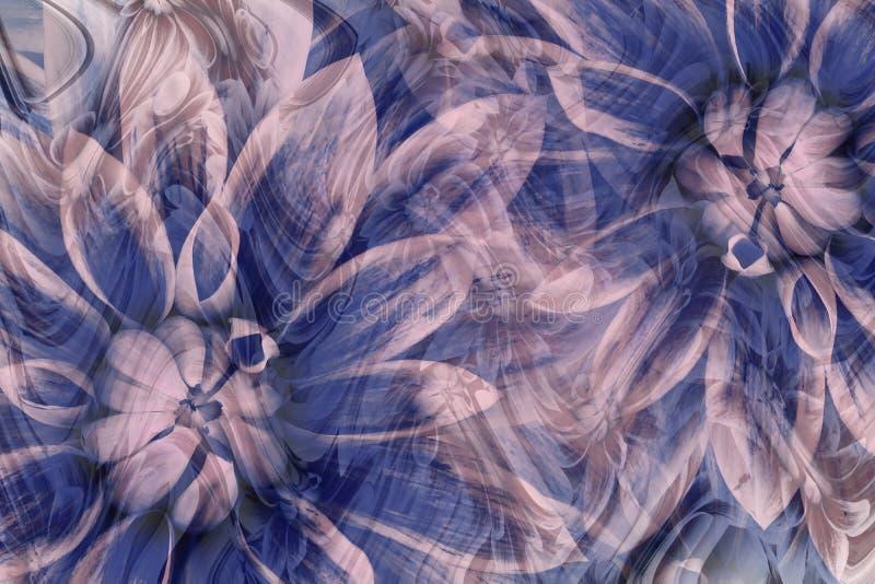 开花灰色蓝色桃红色的大丽花 背景横幅开花表单少许桃红色螺旋 花卉拼贴画 抽象构成 皇族释放例证