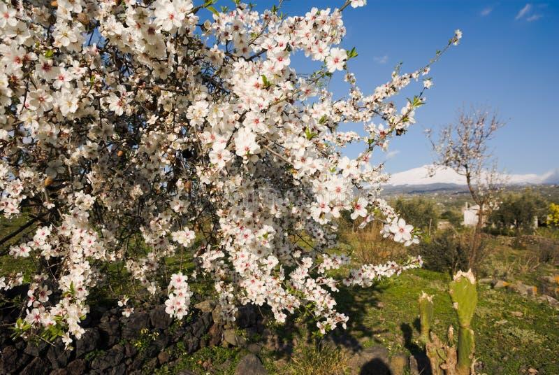 开花的丰富的白色 图库摄影
