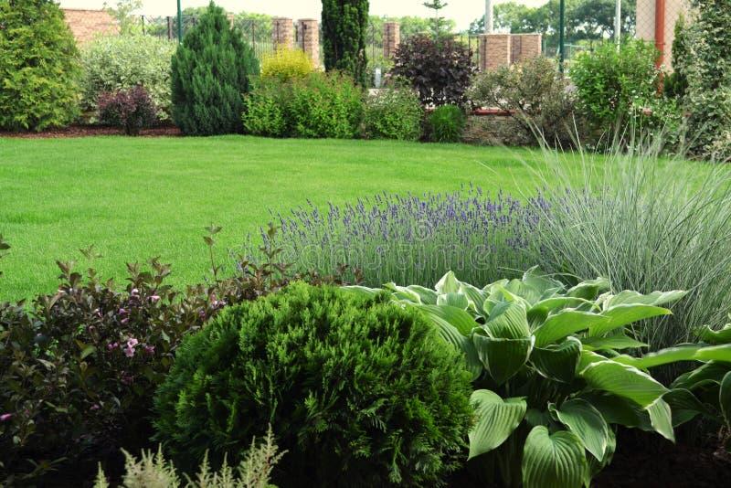 开花的多年生植物、装饰草和灌木设计与绿色草坪 图库摄影