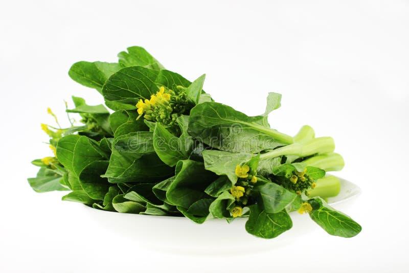开花的大白菜 库存图片