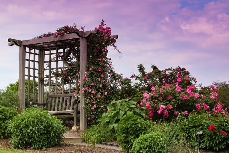 开花的庭院山坡粉红色玫瑰格子VA 免版税库存图片