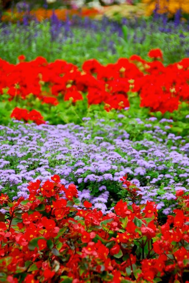开花的庭院 免版税库存照片