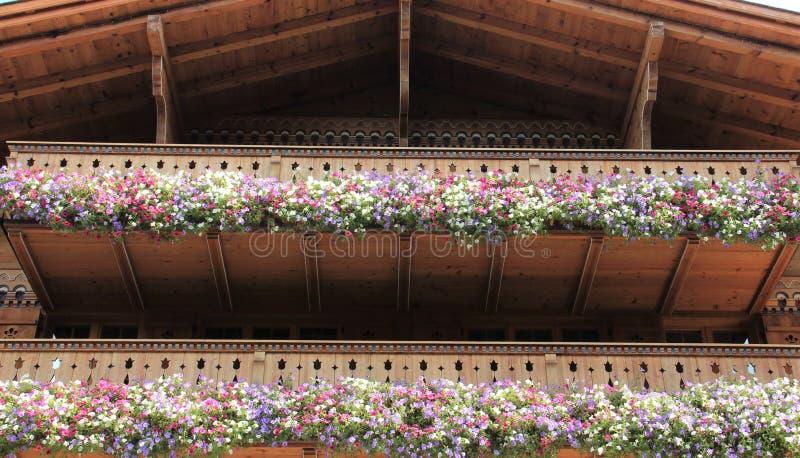 开花的开花的色的喇叭花 库存图片
