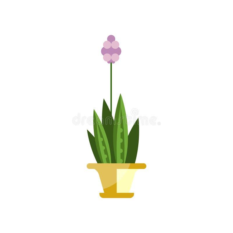 开花的房子植物,在罐,典雅的家庭装饰传染媒介例证的室内花 皇族释放例证
