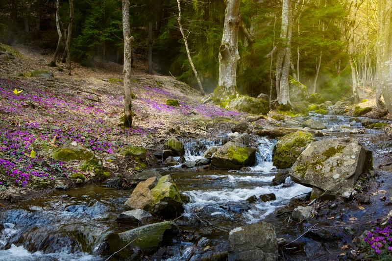 开花的春天森林;山小河和春天花 免版税库存图片