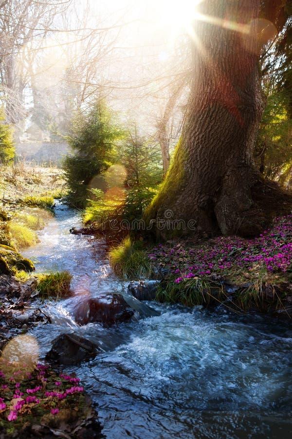 开花的春天森林;山小河和春天花 库存照片