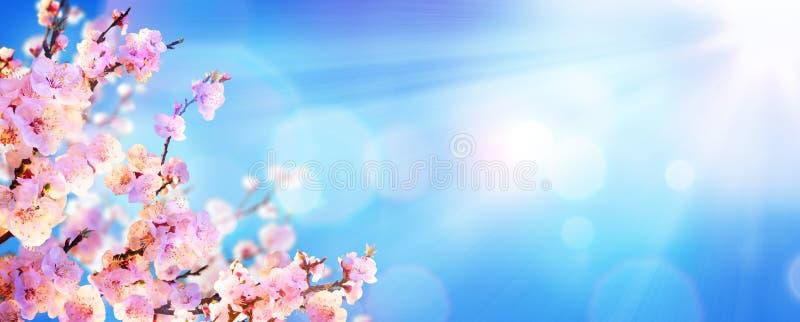 开花的春天-有阳光的杏仁开花 图库摄影