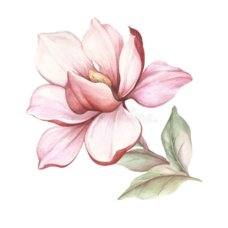 开花的木兰分支的图象 额嘴装饰飞行例证图象其纸部分燕子水彩 向量例证