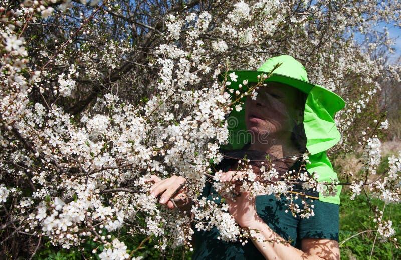 开花的李子和蜂农 库存图片