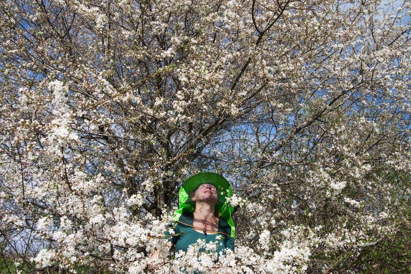 开花的李子和蜂农 库存照片