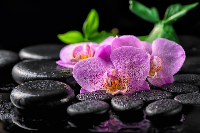 开花的枝杈淡紫色兰花花, gree美好的温泉设置  库存照片