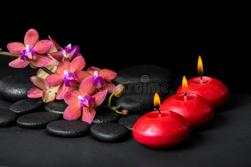 开花的枝杈红色兰花花, phalae的美好的温泉概念 库存图片
