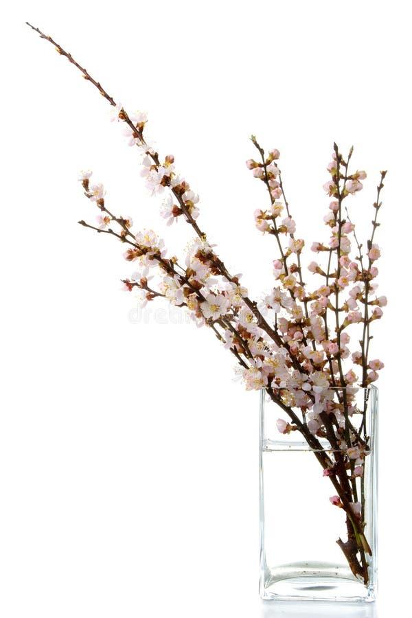 开花的枝杈 库存照片