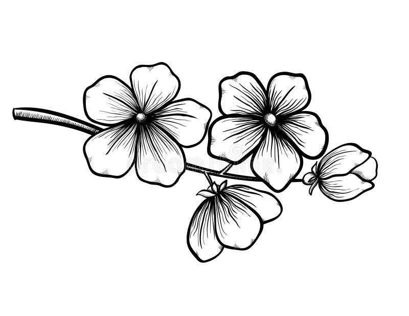 开花的树分支在图表黑白色样式的,用手画。春天的标志 库存例证