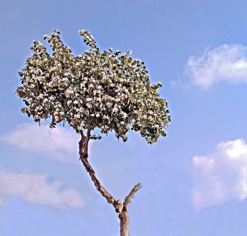 开花的树和天空 库存图片