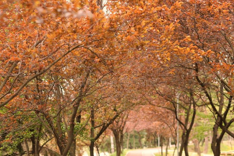 开花的树在公园 免版税图库摄影