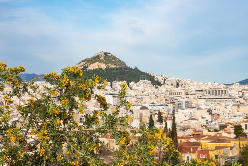 开花的树在反对雅典都市风景的焦点和在焦点外面的Lykavitos小山在雅典,希腊 库存图片