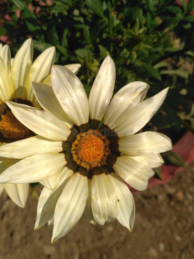 开花的植物群 免版税库存图片