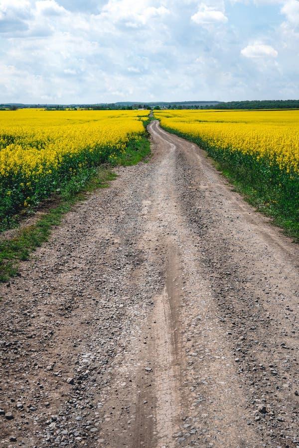 开花的油菜籽植物的金黄领域绿色能量和石油工业的,燃料 土路,垂直的照片 免版税库存图片