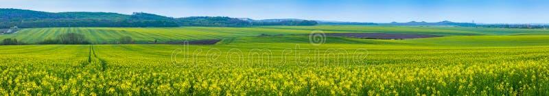 开花的油菜Felds  库存图片