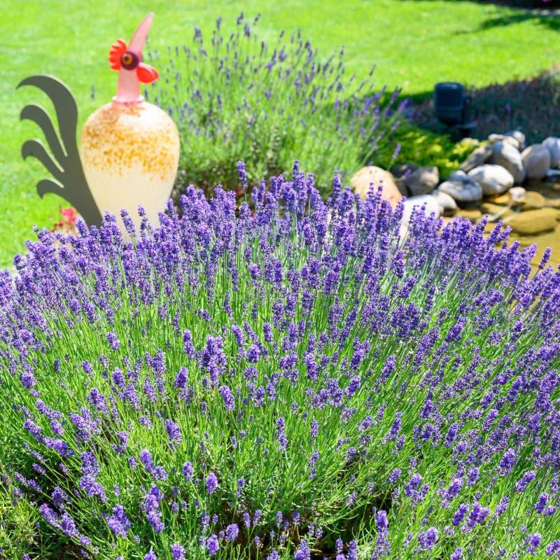 开花的淡紫色和五颜六色的玻璃雄鸡在夏天庭院里 免版税库存照片