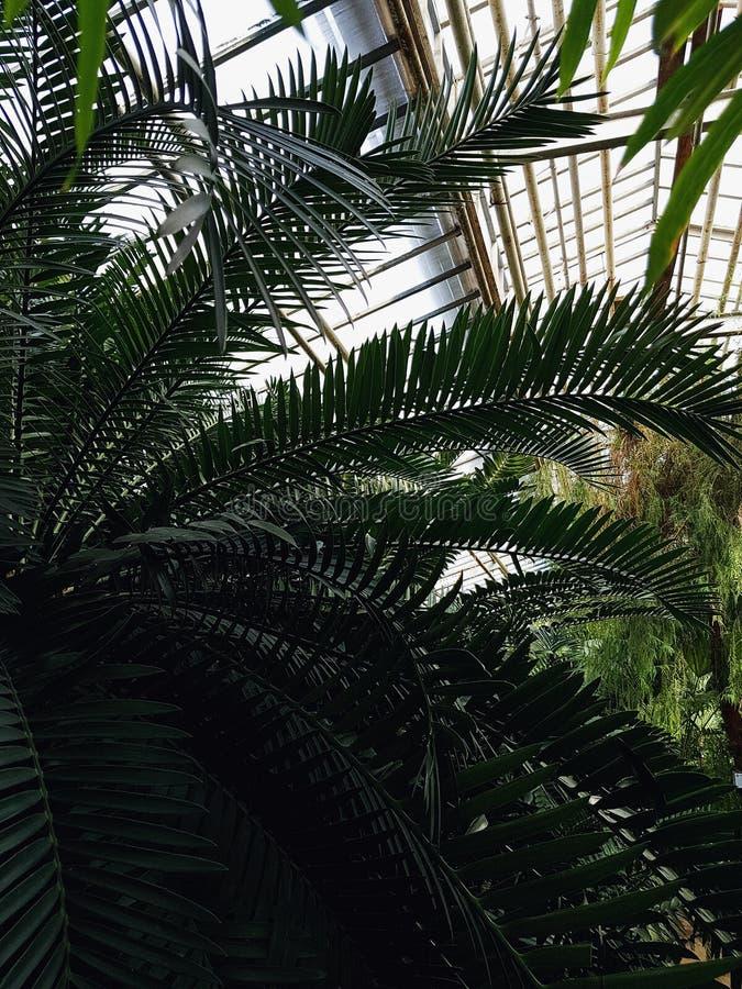 开花的热带庭院 图库摄影