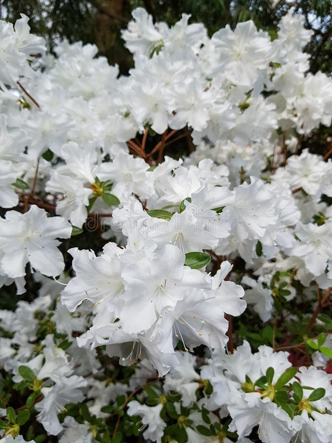 开花的热带庭院 库存照片