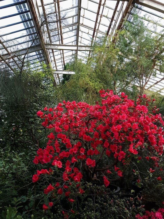 开花的热带庭院 免版税图库摄影