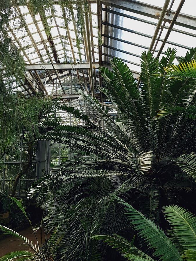 开花的热带庭院 免版税库存图片