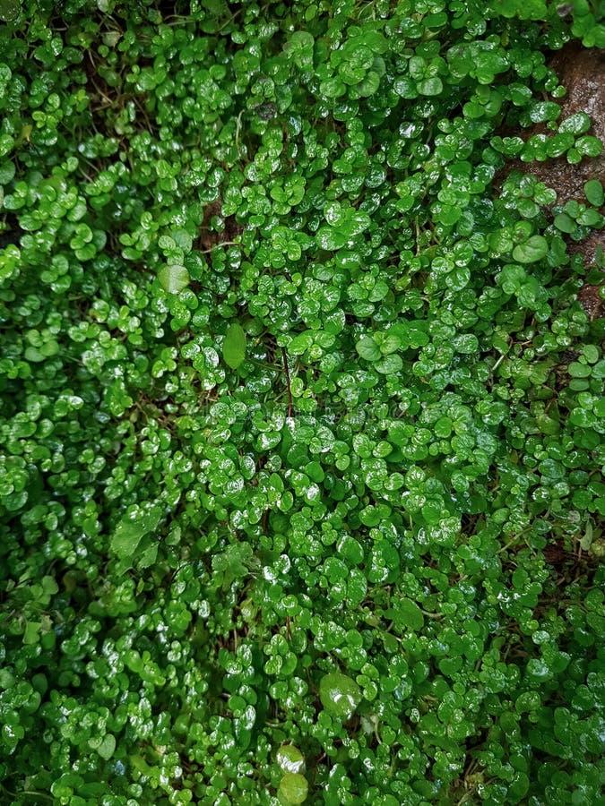 开花的热带庭院 免版税库存照片