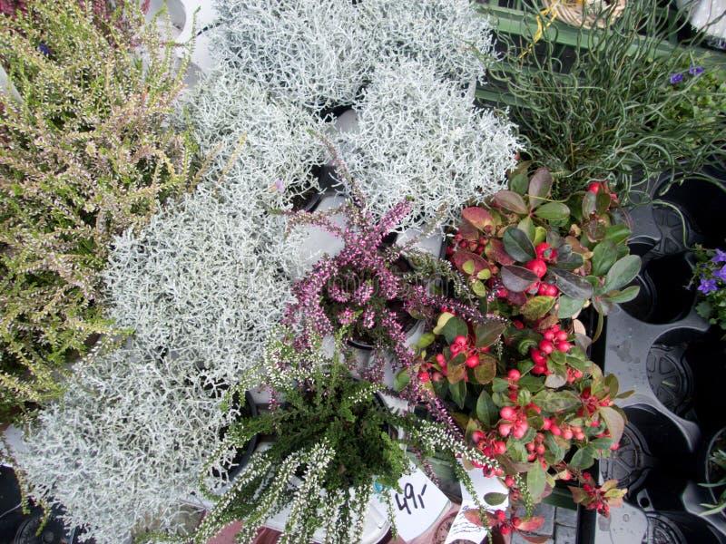 开花的石南花和混杂的花 库存照片