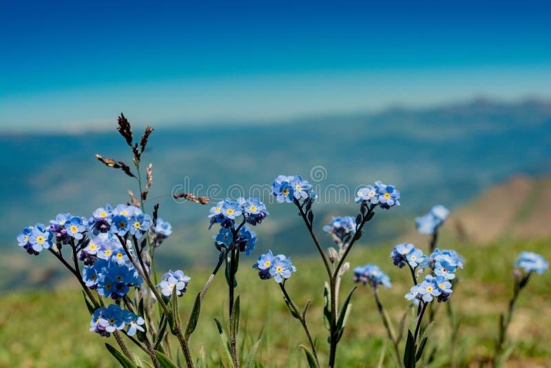 开花的美丽的五颜六色的野花视线内 库存图片