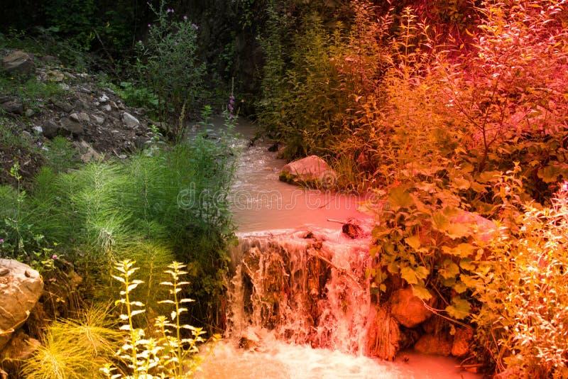 开花的美丽的五颜六色的野花视线内 图库摄影