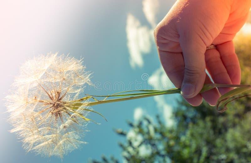 开花的美丽的五颜六色的野花视线内 免版税库存图片