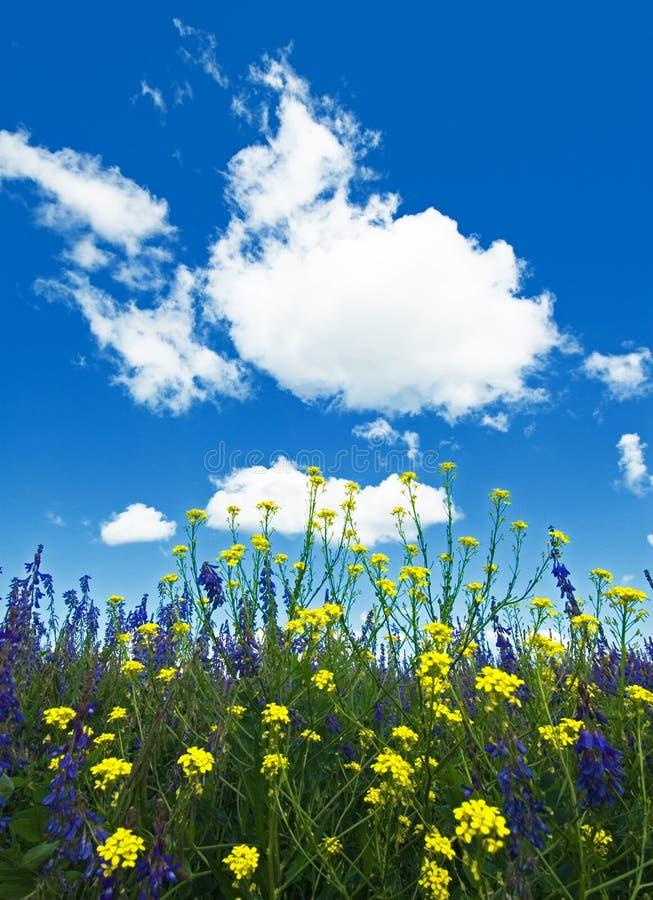 开花的花、草和天空背景  免版税库存图片