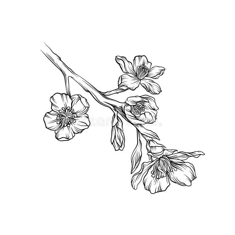 开花的花分支单色剪影,手拉的花卉设计元素传染媒介例证 皇族释放例证