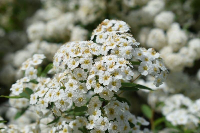 开花的花在公园 免版税库存图片