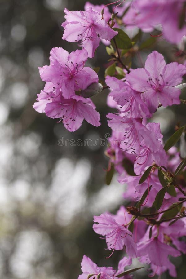 开花的花在城市公园 免版税库存照片