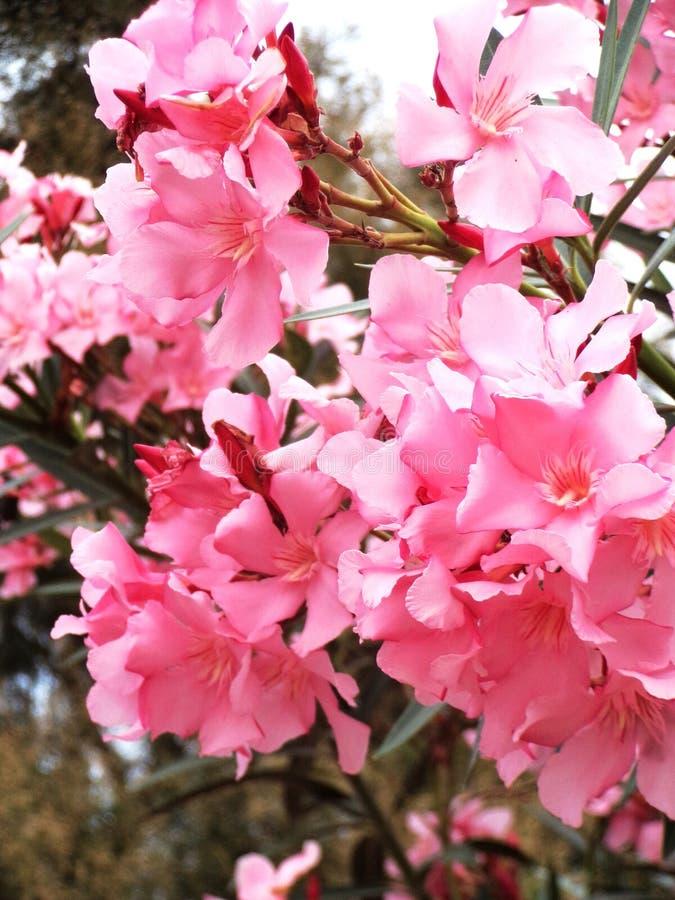 开花的花春天 免版税库存照片