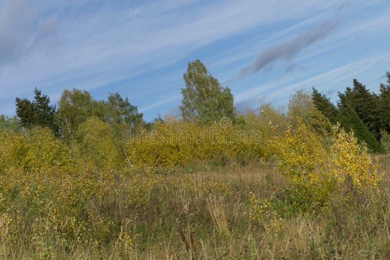 开花的草甸和树丛 晴朗的日 典型结尾横向俄国的春天 免版税库存照片