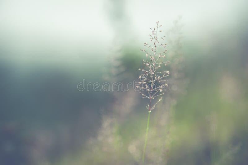 开花的草软的迷离结构  库存图片