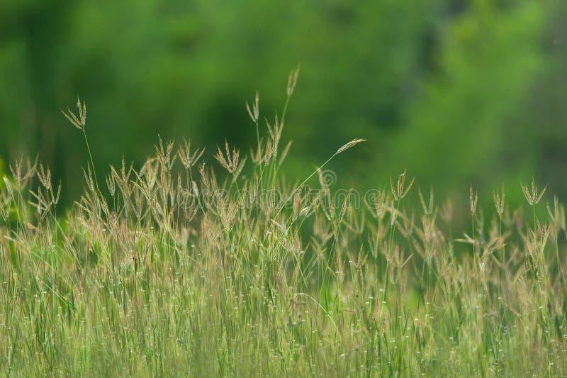 开花的草软的迷离结构  库存照片