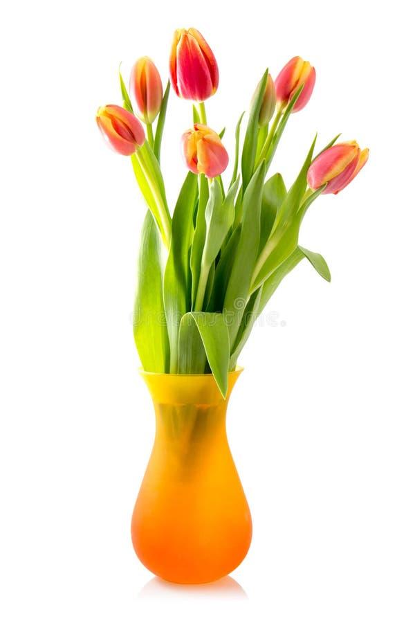 开花的郁金香花束在花瓶的 库存图片