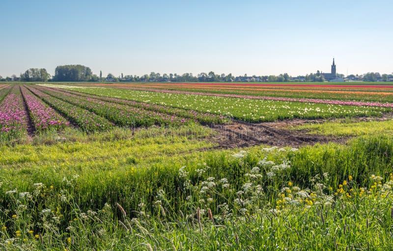 开花的野生植物和草在landsca的前景 库存图片