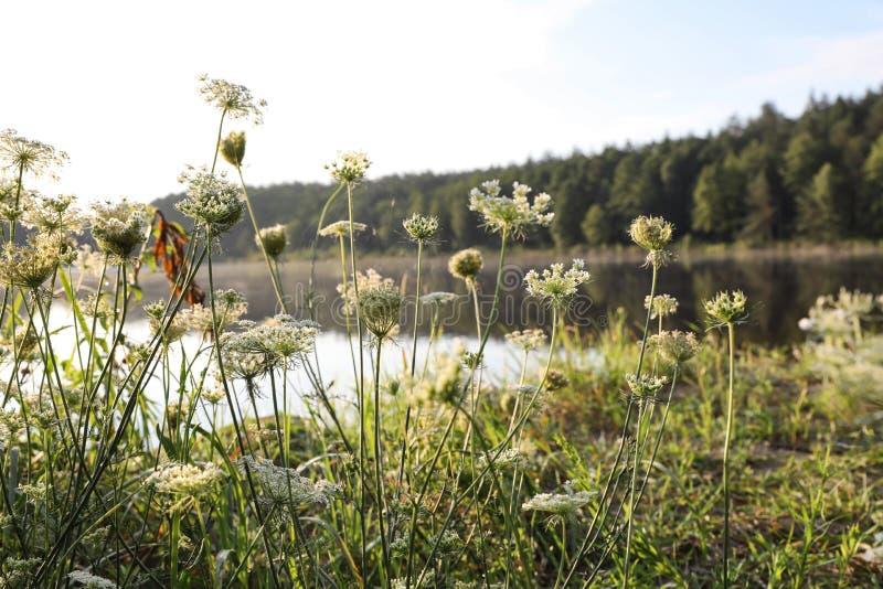 开花的野花临近湖 库存照片