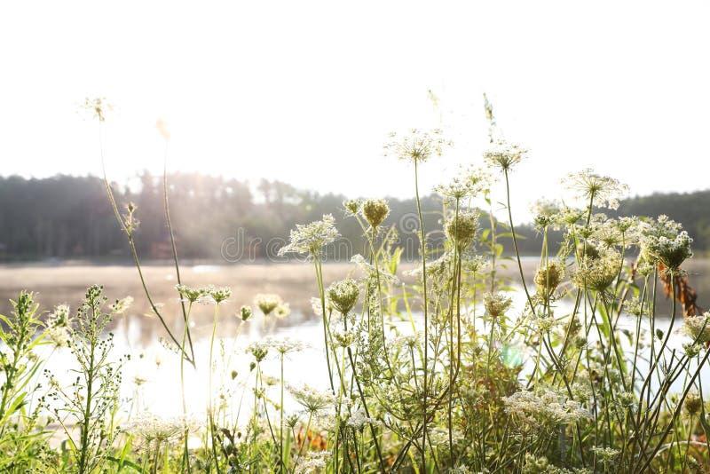 开花的野花临近湖 免版税库存图片