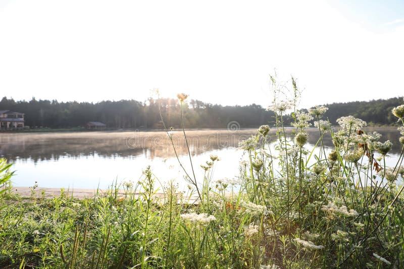开花的野花临近湖 库存图片