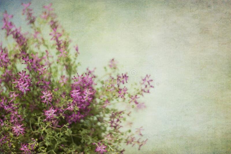 开花的野花抽象背景与拷贝空间的 免版税图库摄影