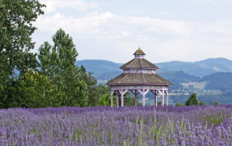 开花眺望台淡紫色维多利亚女王时代的著名人物葡萄酒 库存照片