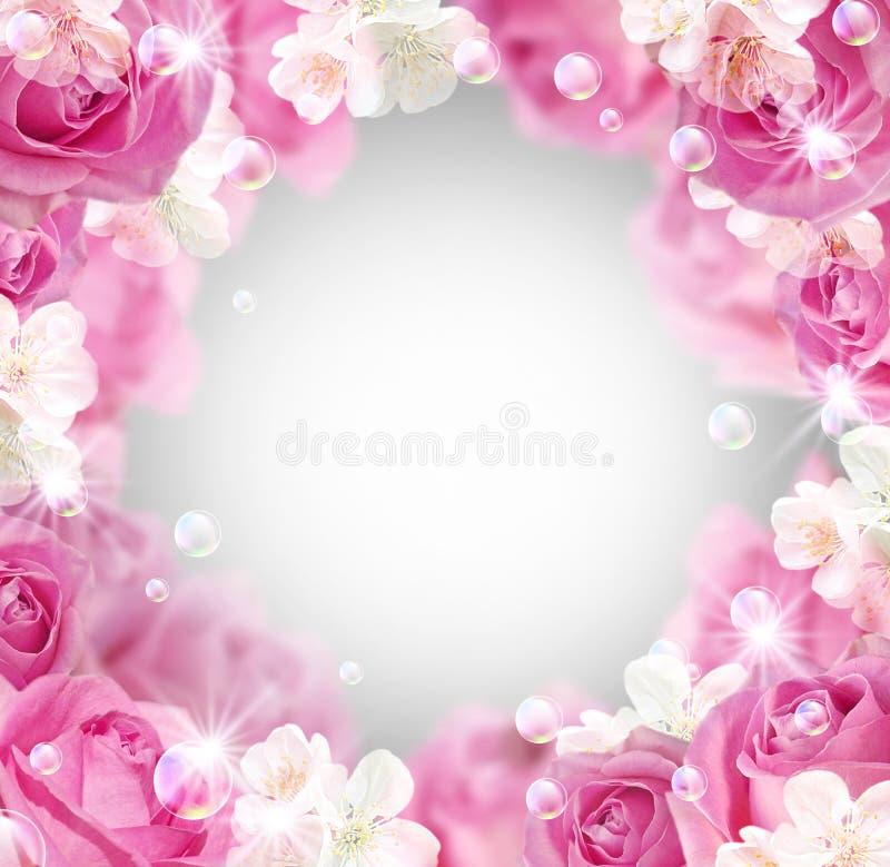 开花空白的玫瑰 皇族释放例证